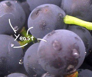 fruits that contain yeast picture 7
