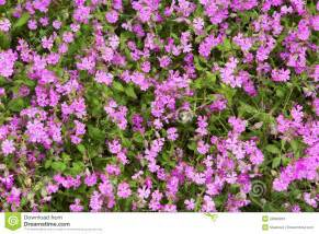 small pink herbal picture 1