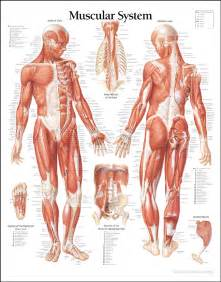 joint and muscle pain and enlarged liver picture 4