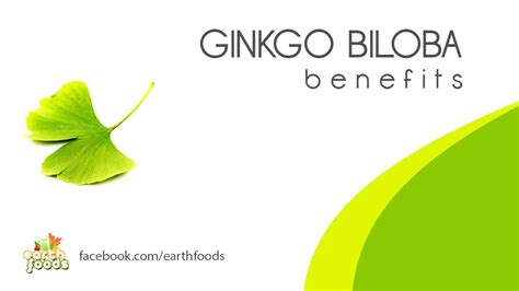 what can you use ginkgo biloba picture 4