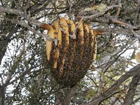 hive picture 9