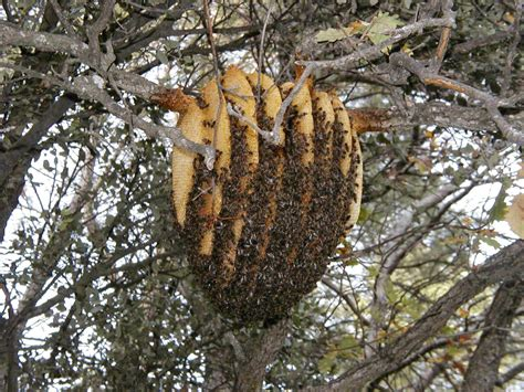 Natural Bee Hive picture 5