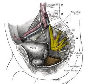 massage prostate diagram picture 11