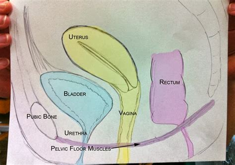diagram of bladder prolapse picture 1