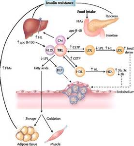 diabetes and liver function picture 11