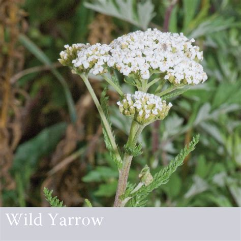 yarrow vs drugs picture 13