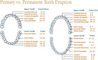 primary teeth eruption picture 15