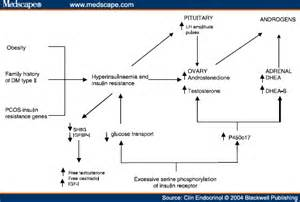 ovarian new growth pathophysiology picture 5