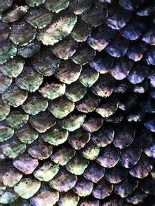 ozmo's high-rez ec skin textures picture 18