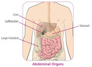 where is your gall bladder located picture 9