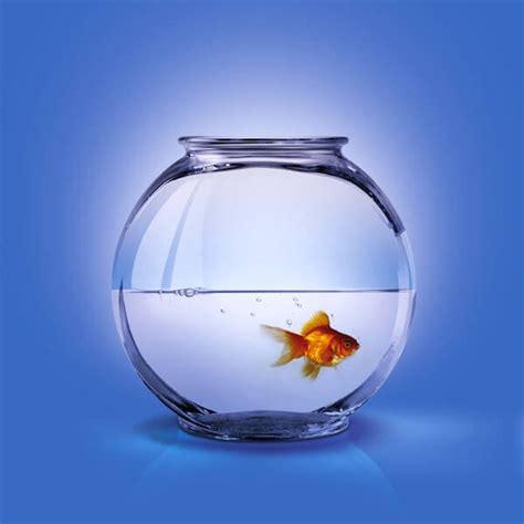 aquarium health picture 13
