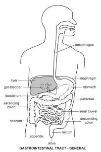 intestinal collapse anorexia symptoms picture 2