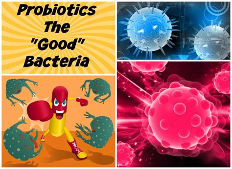 live bacteria probiotic over the counter probiotic picture 3