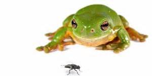 diet for a frog picture 10