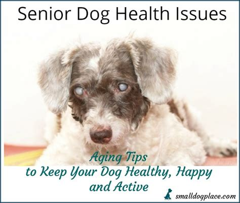 aging dogs health picture 3