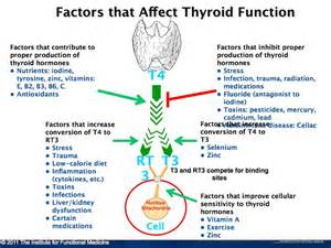interactions with metoprolol and thyroid hormone replacement picture 11