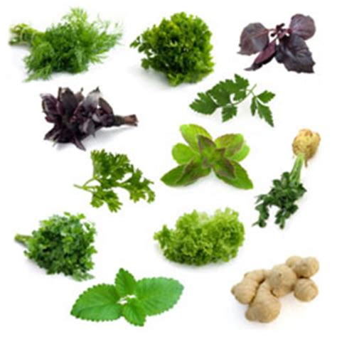 what herb blocks belly fat picture 11