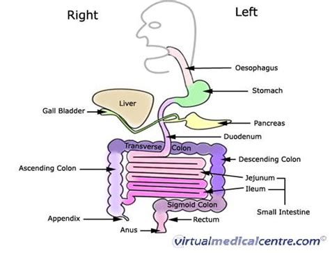 small bowel picture 7
