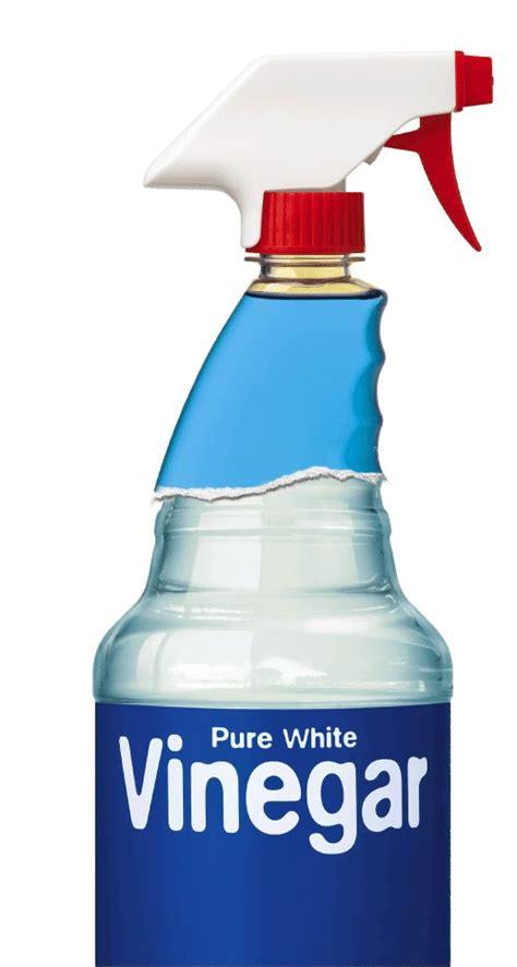 vinegar picture 10