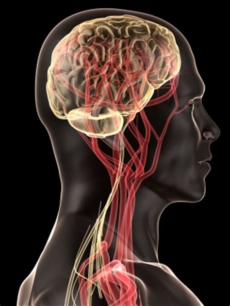 blood flow to male brain picture 9