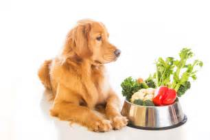 canine diet picture 7