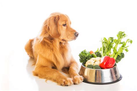 canine diet picture 3