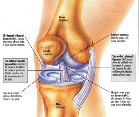 knee joint damage picture 5