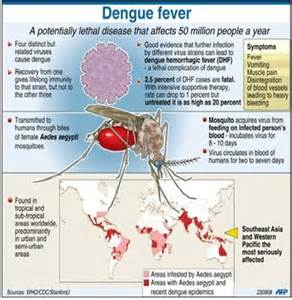 dengue fever caribbean outbreaks picture 7