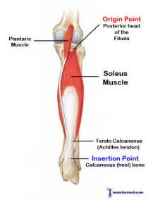 first degree gastrocnemius muscle strain picture 10