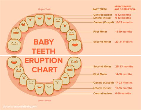 childrens teeth picture 7