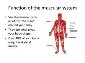 muscle functions picture 2