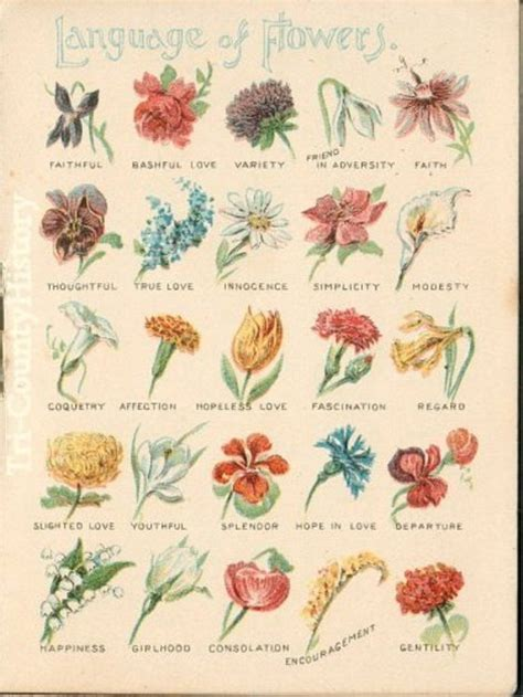 Glossary of herbs and their uses picture 10