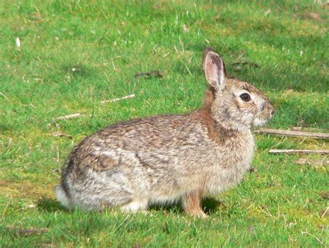 bunnies diet picture 10