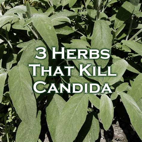 what herbs will kill cellulite picture 13