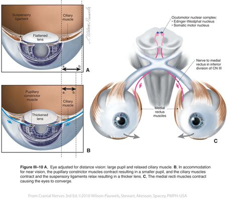 ciliary muscle and trigeminal eye pain picture 5