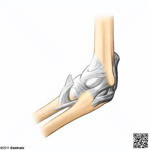 elbow joint picture 15