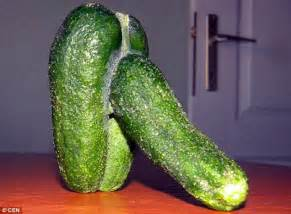 penis shaped cucumbers picture 1