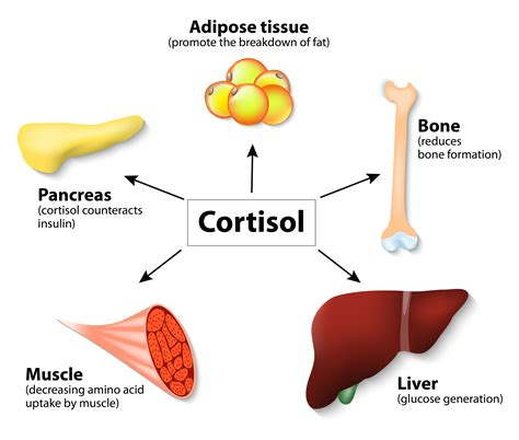 weight loss cortisol picture 1