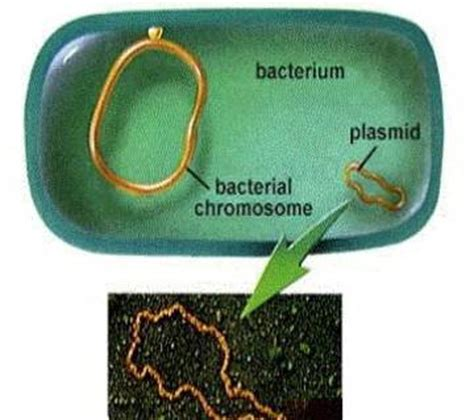 what is it when you have ongoing bacterial picture 3