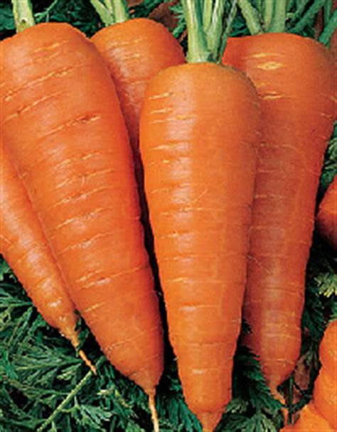 carrot is good for acne picture 10