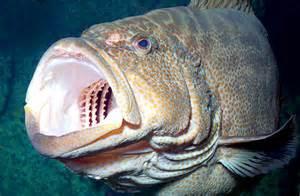 aquarium teeth picture 7