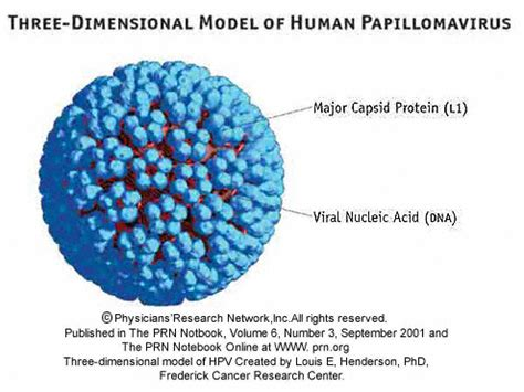 human papilloma virus purchase picture 2