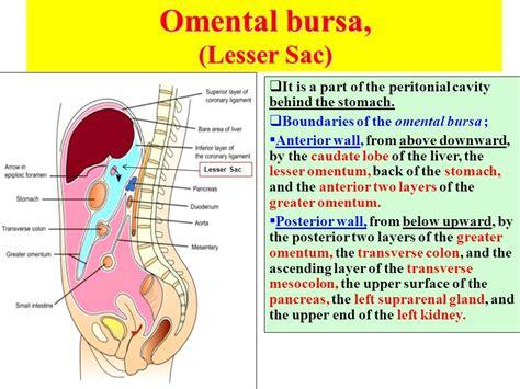 colon anatomy ppt picture 13