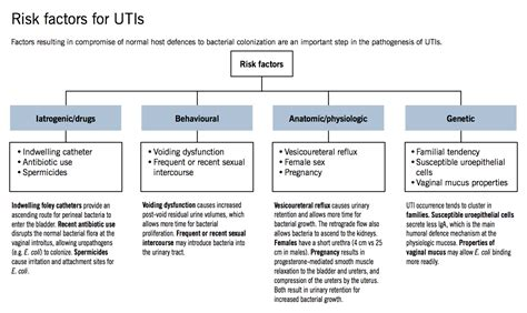 diagram of pathophysiology uti picture 11