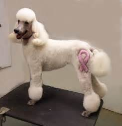 how to cut poodles hair picture 10