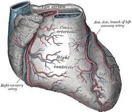 Ascad hyperlipidemia mcr prostate ca picture 18