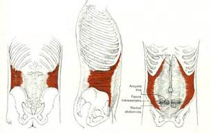 muscle pain in stomach when el movement picture 10