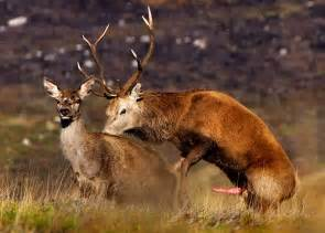 deer sex with humans picture 5