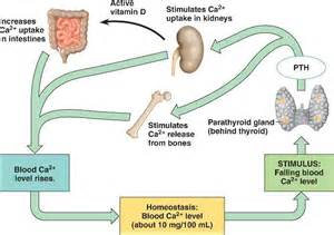 how do blood products affect calcium levels picture 7
