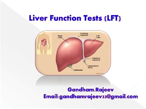can body cleanse elevate liver enzymes picture 4